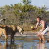 Sirga: A Lioness with a Human BFF